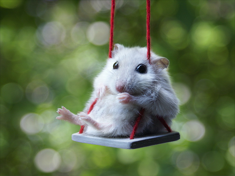 hamster-on-a-swing-big