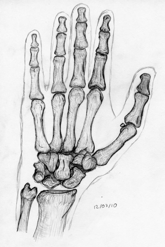 my_left_hand_bones_by_nocara