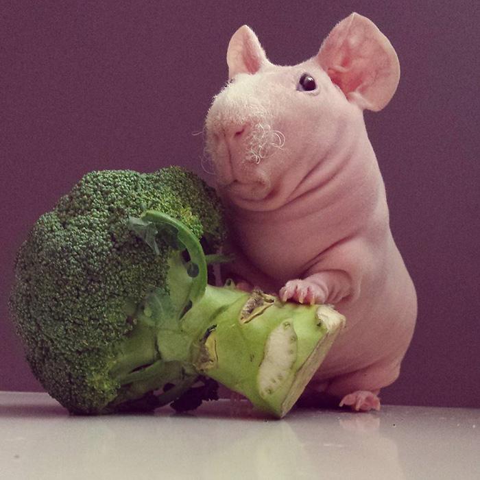 naked-guinea-pig-food-photoshoot-ludwik-54__700-2